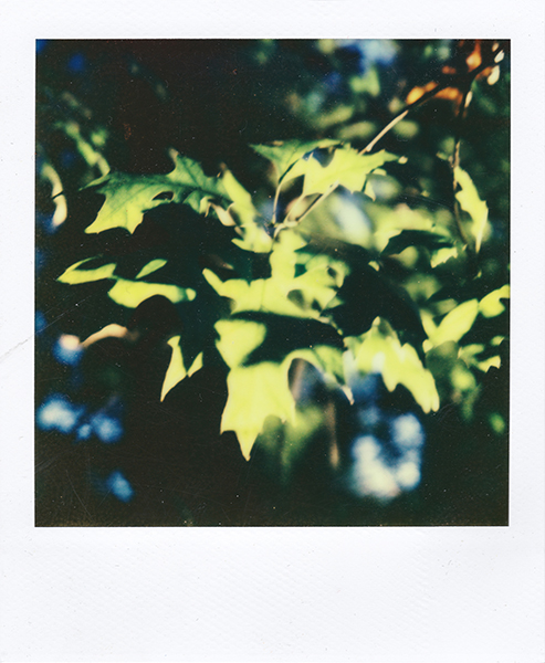Polaroidsbook 124.jpg