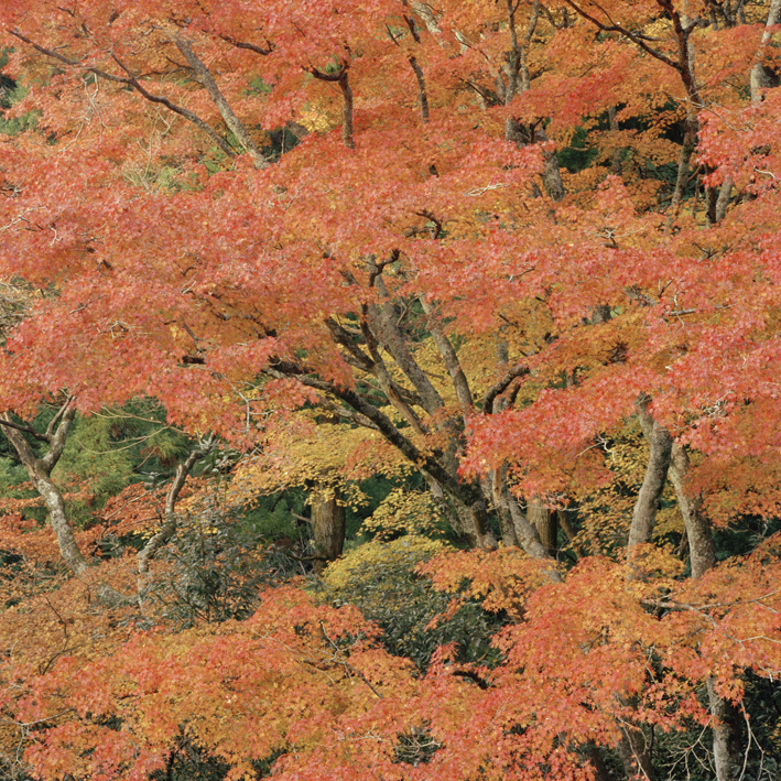 red forest small.jpg