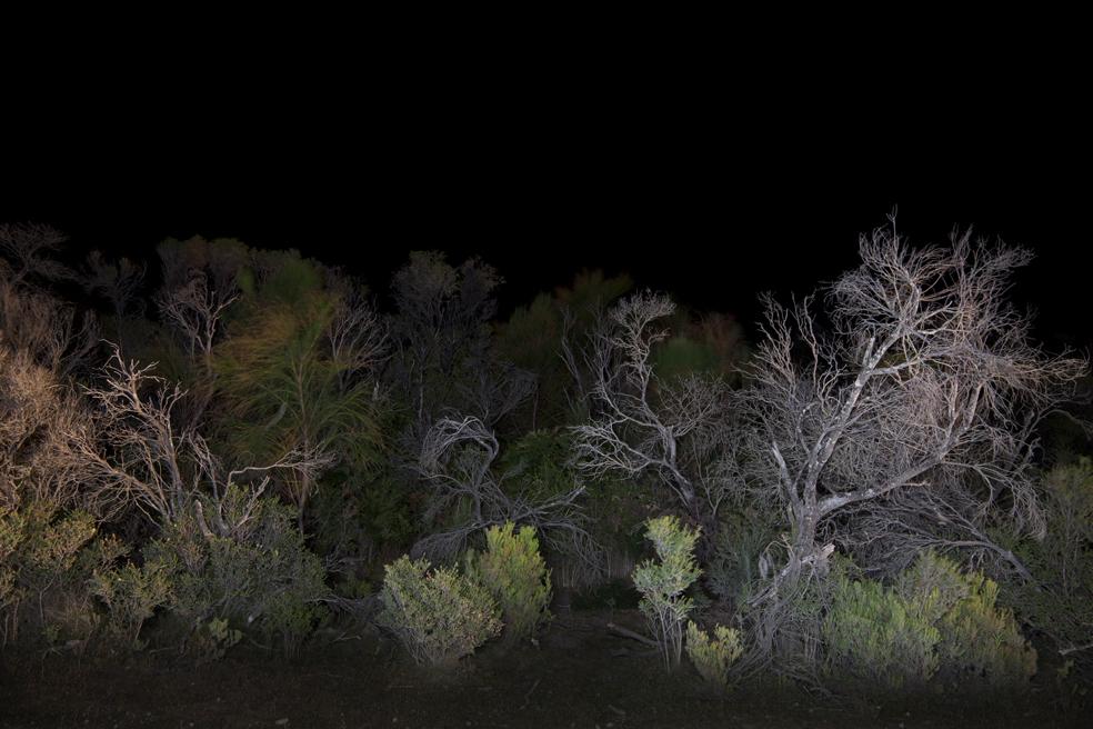 _MG_8023 treeline.jpg