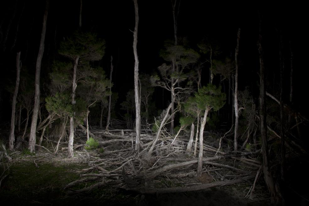 _MG_8248 treetrunks.jpg