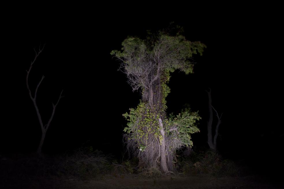 MG_8262 single tree copy.jpg