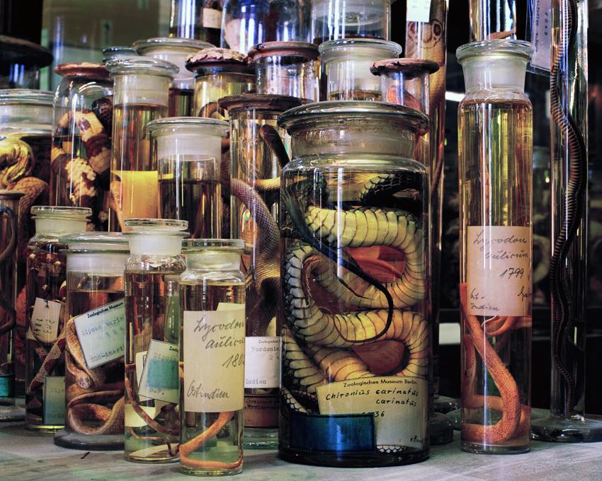 snake_front.jpg