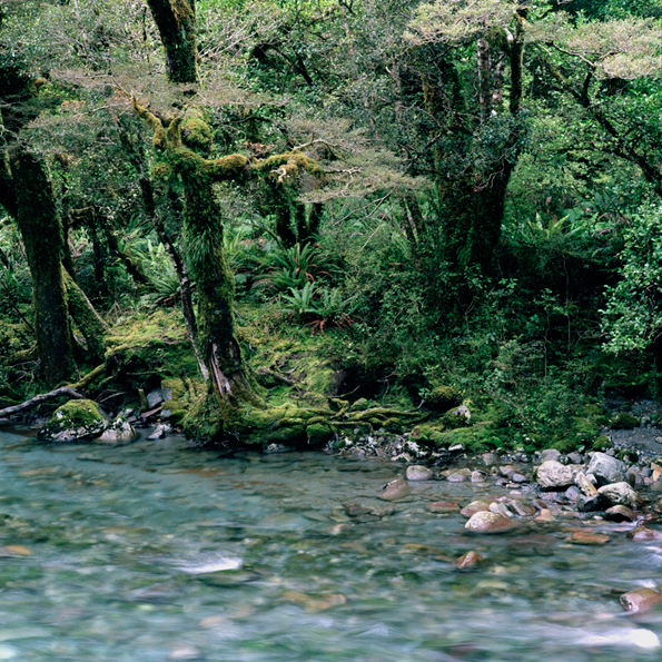 NZriver06  copy.jpg