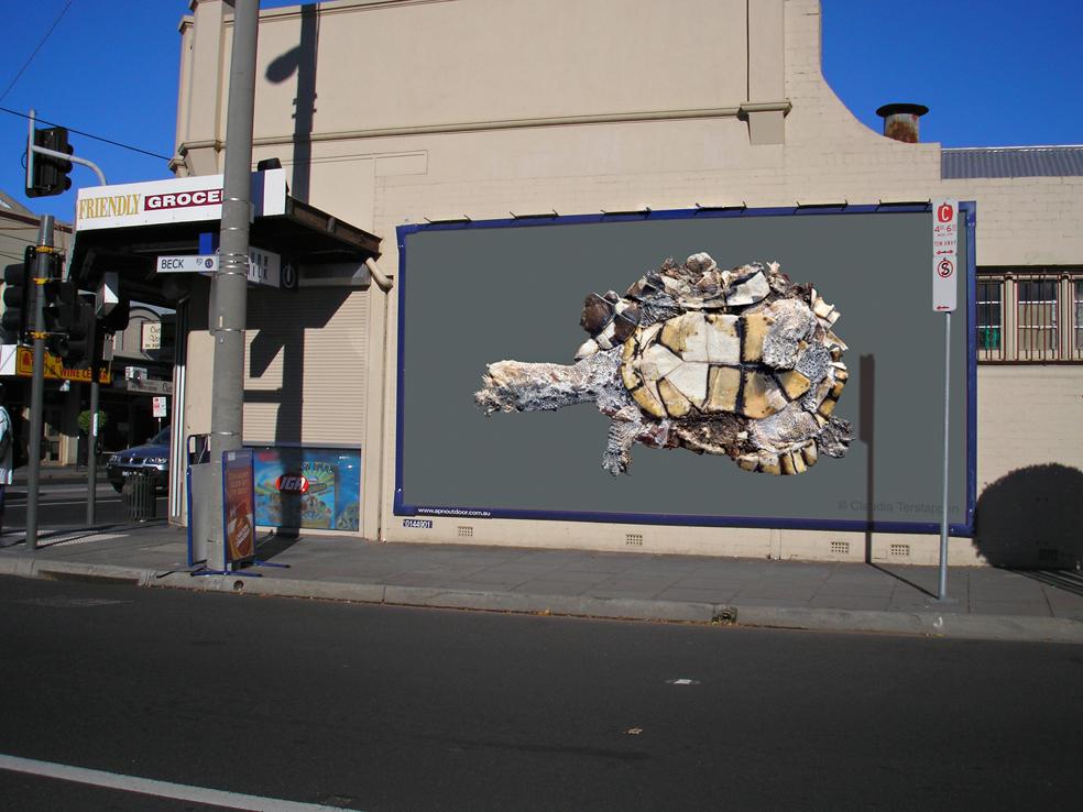 billboard, Long-Necked Turtle, Australia 2009