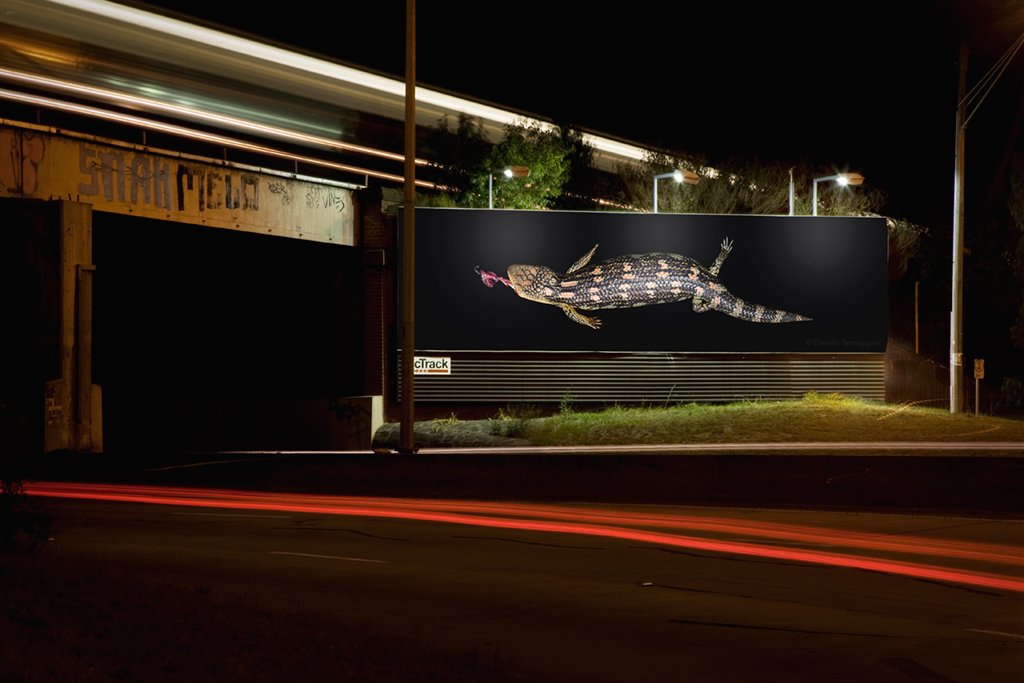 billboard, Eastern Blue-Tongued Lizard   ( Tiliqua scincoides ), Australia 2010
