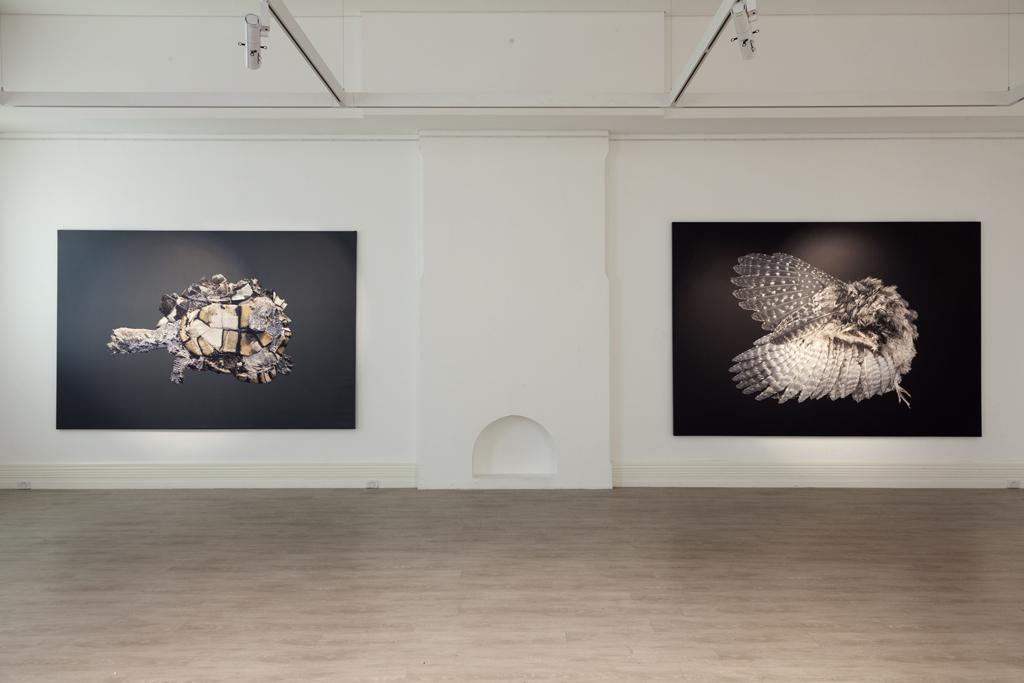A language of the vanishing,   installations hot, Murray Art Museum, Albury, Australia 2017