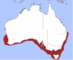 Distribution of the gummy shark around the southern coast of Australia.