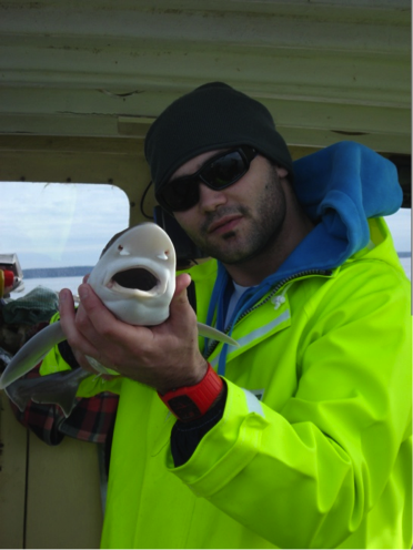 A juvenile gummy shark caught in Western Port Bay for research purposes. Notice the plate-like gums used for crushing small prey.