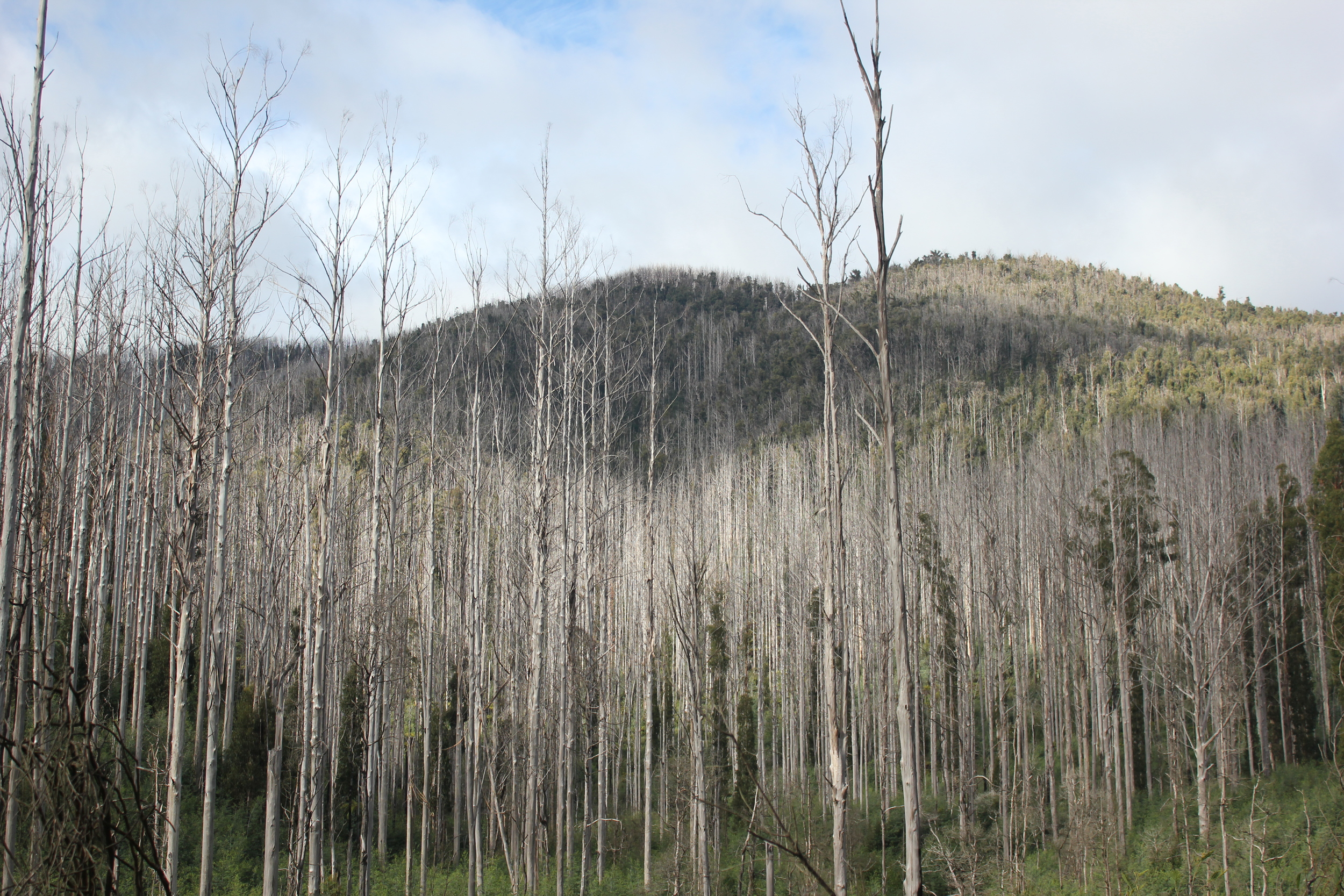 The landscape around Marysville is a stark reminder of the power of nature.