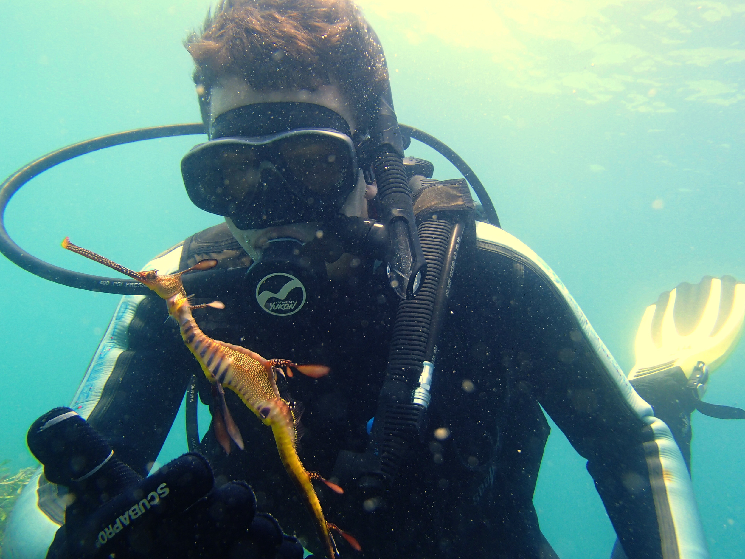 Wild Melbourne crew member, Christopher McCormack, gets a close encounter with a graceful Weedy Seadragon.