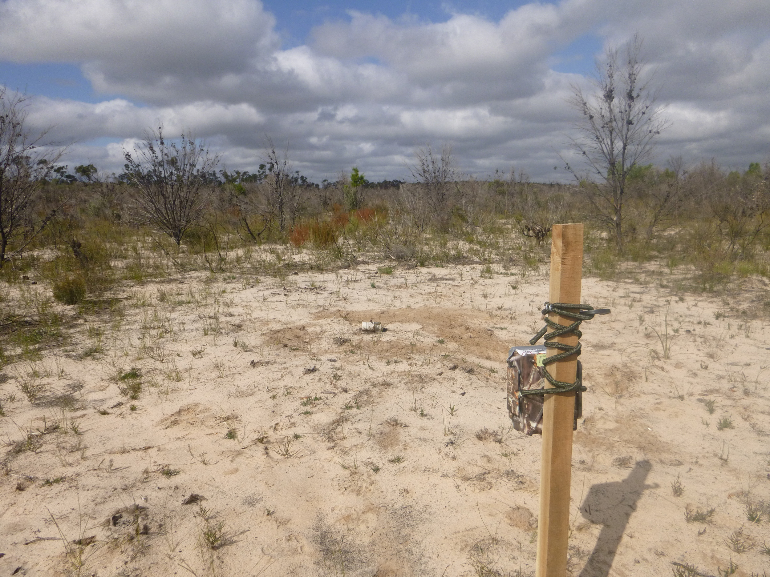 The outward facing predator camera in some early successional heathland. Photo: William Geary