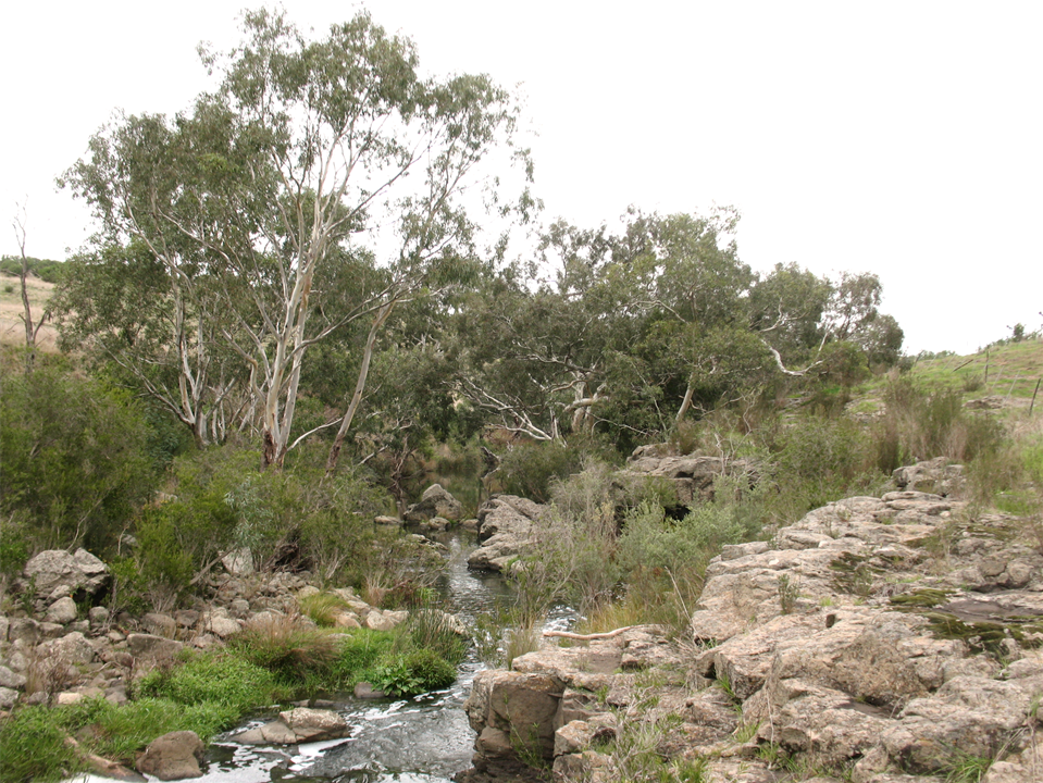 One of the many picturesque streams found around Melbourne which are home to Platypuses.