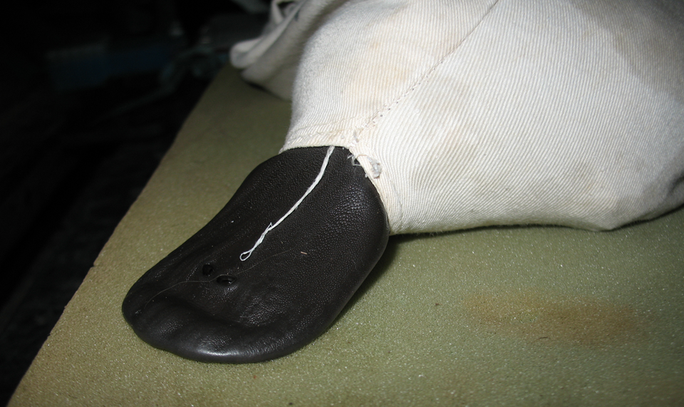 All Platypuses remained relatively calm throughout the handling process. Here an individual's bill protrudes thorough an intentionally made opening in a cotton holding bag.