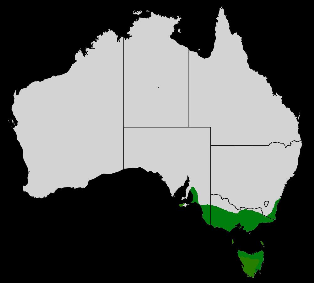 Range of the Common Heath. Image Credit:  http://en.wikipedia.org/wiki/Epacris_impressa