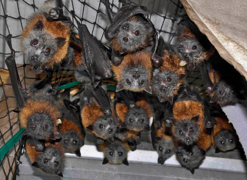 Image Credit: Alison Kuiter, Animalia wildlife shelter.