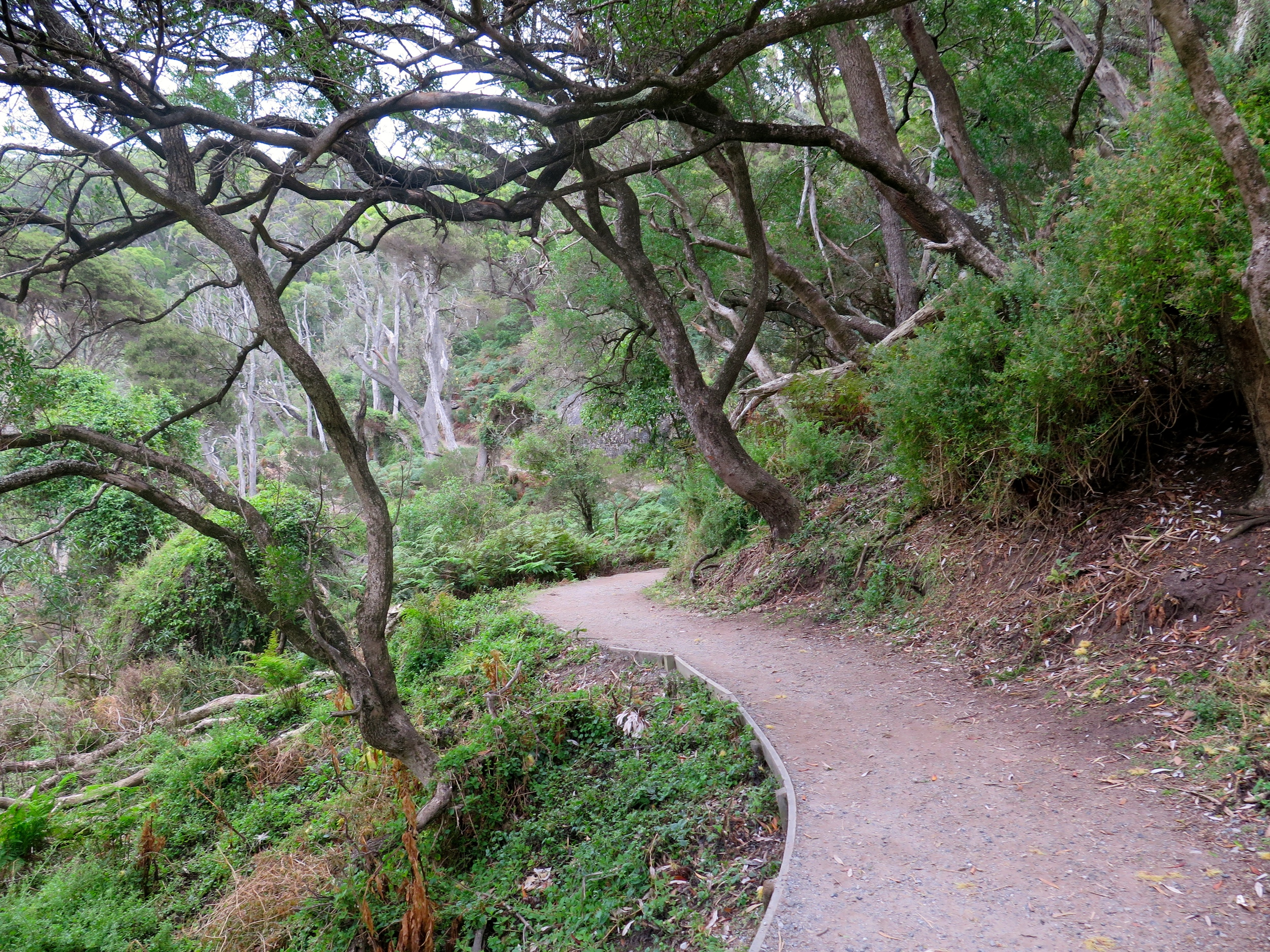 A beautiful section of the walking track. Photo: Cathy Cavallo