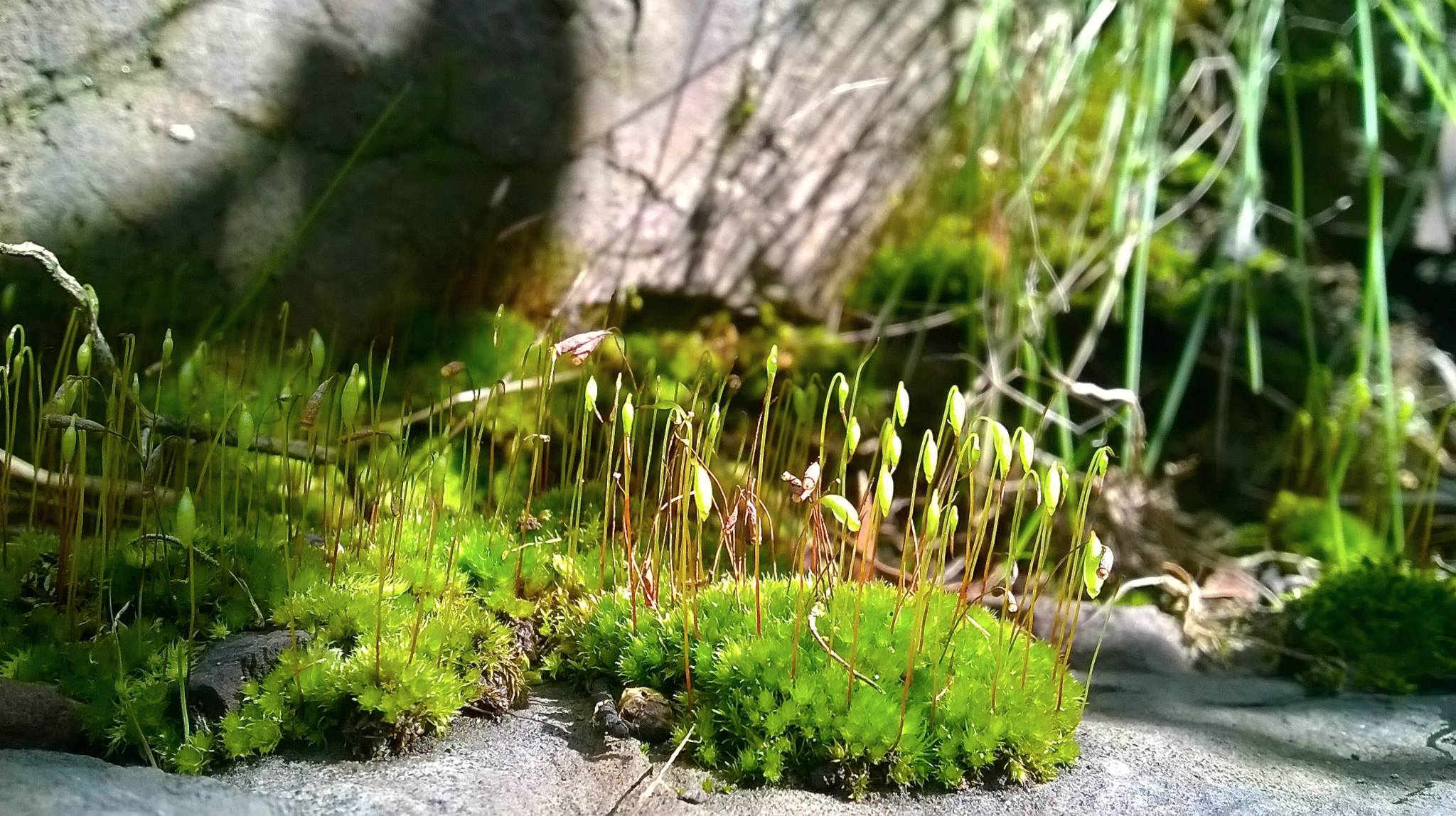 Some gorgeous moss found on the walk. Photo: Cathy Cavallo