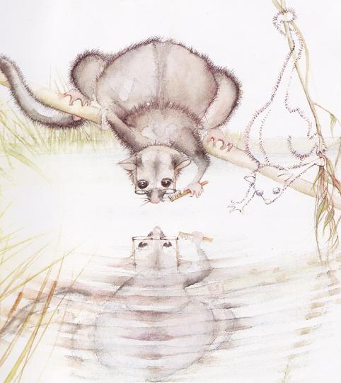 Let us hope that the unique mountain pygmy possum does not disappear like little Hush.  Image: Julie Vivas
