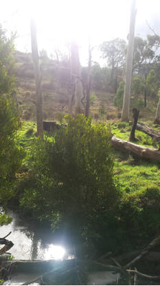 If you look closely, you may be able to spot eastern grey kangaroos in the background.