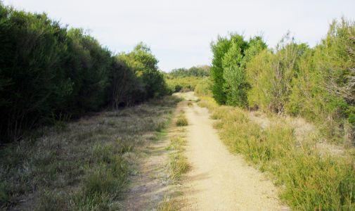 Langwarrin Flora & Fauna Reserve. Image: Parks Victoria