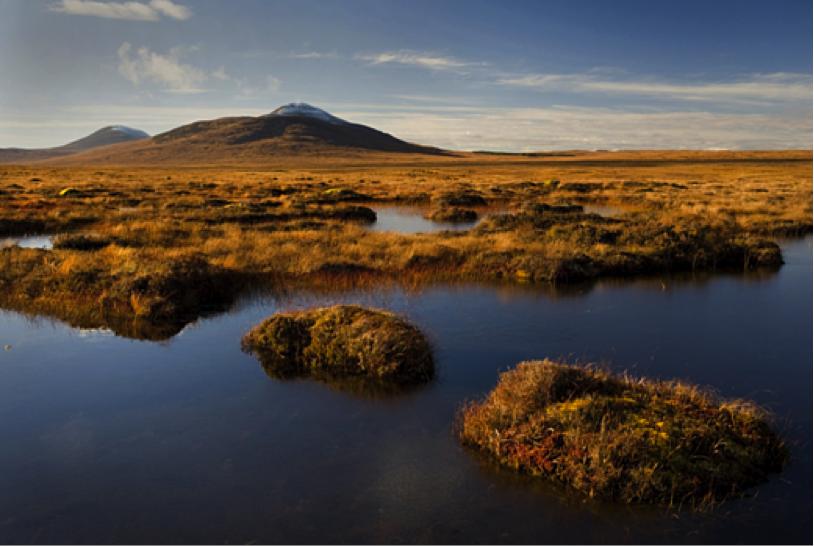Peatlands in Forsinard, United Kingdom.    I    mage:   RSPB   .
