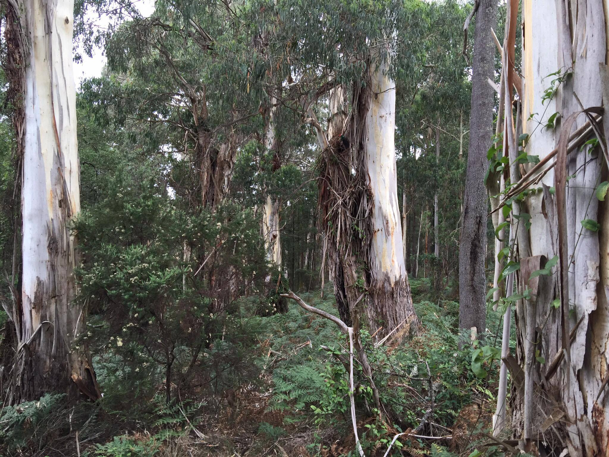 The Gully boasts some impressive native trees as well as more low-lying flora.