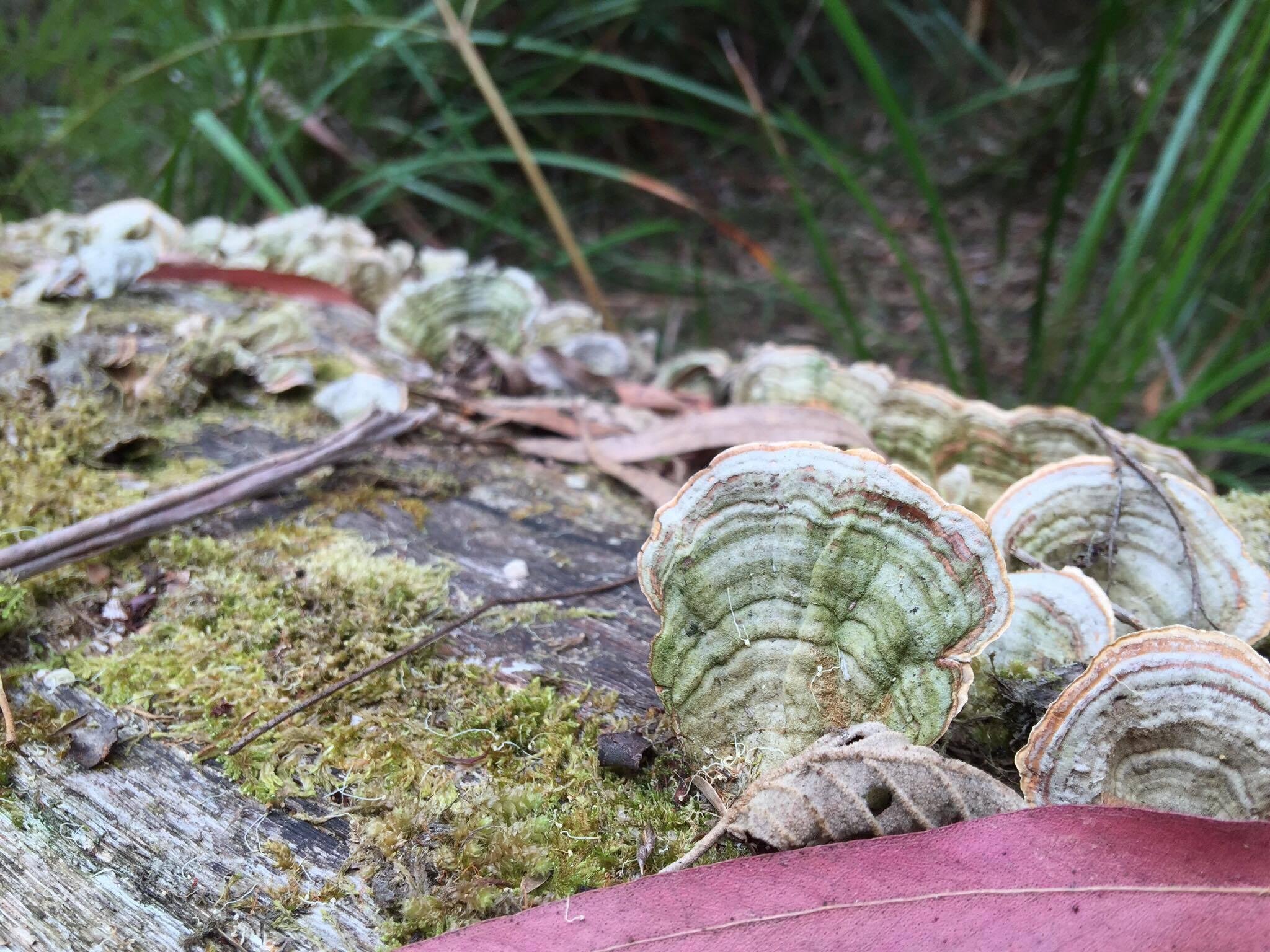 A variety of fungi are abundant along this walk.