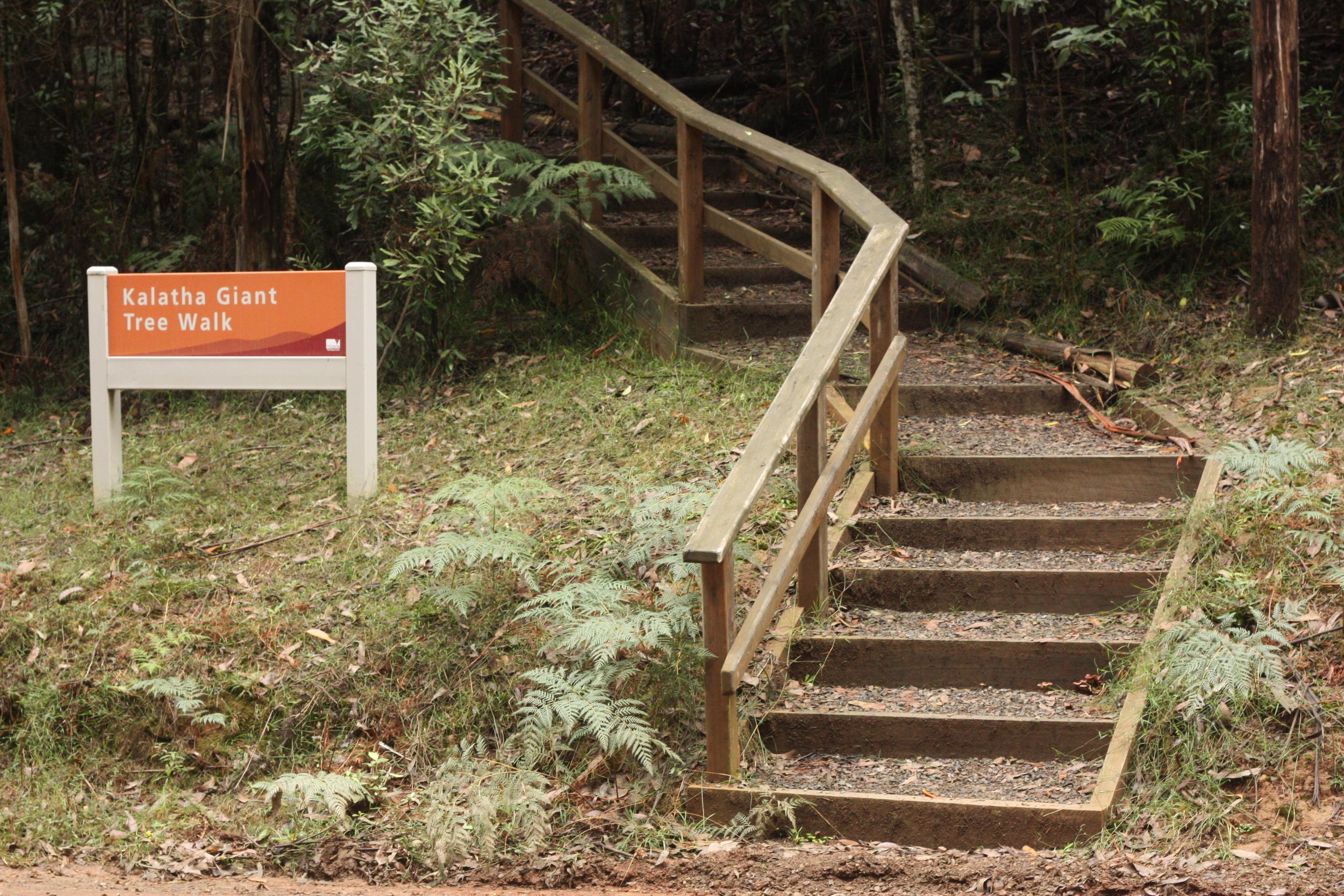 Kalatha Giant Tree Walk entrance. Photo: Alex Mullarky
