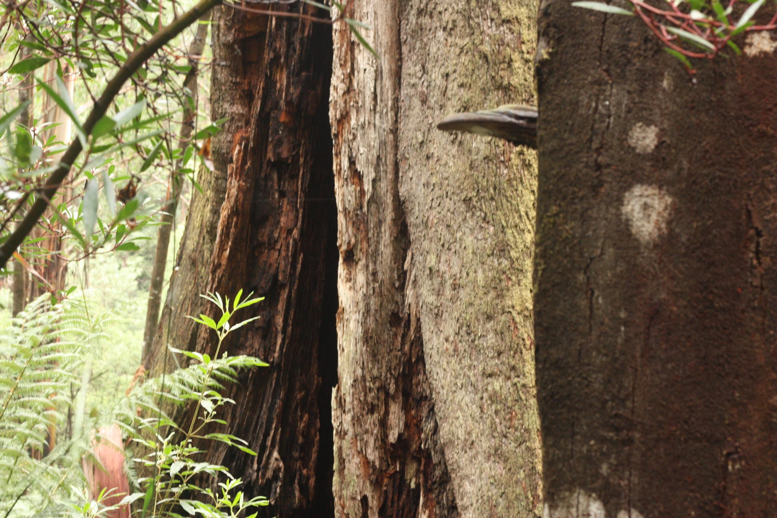 The Toolangi Forest. Photo: Alex Mullarky