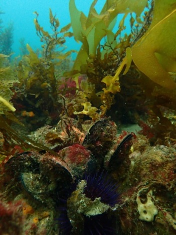 A shellfish reef.  Image: The Nature Conservancy