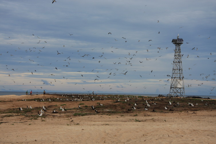 The only artificial structure on the island, the Bramble Cay lighthouse sticks out amongst flocks of nesting seabirds.  Image: Natalie Waller via  The Conversation