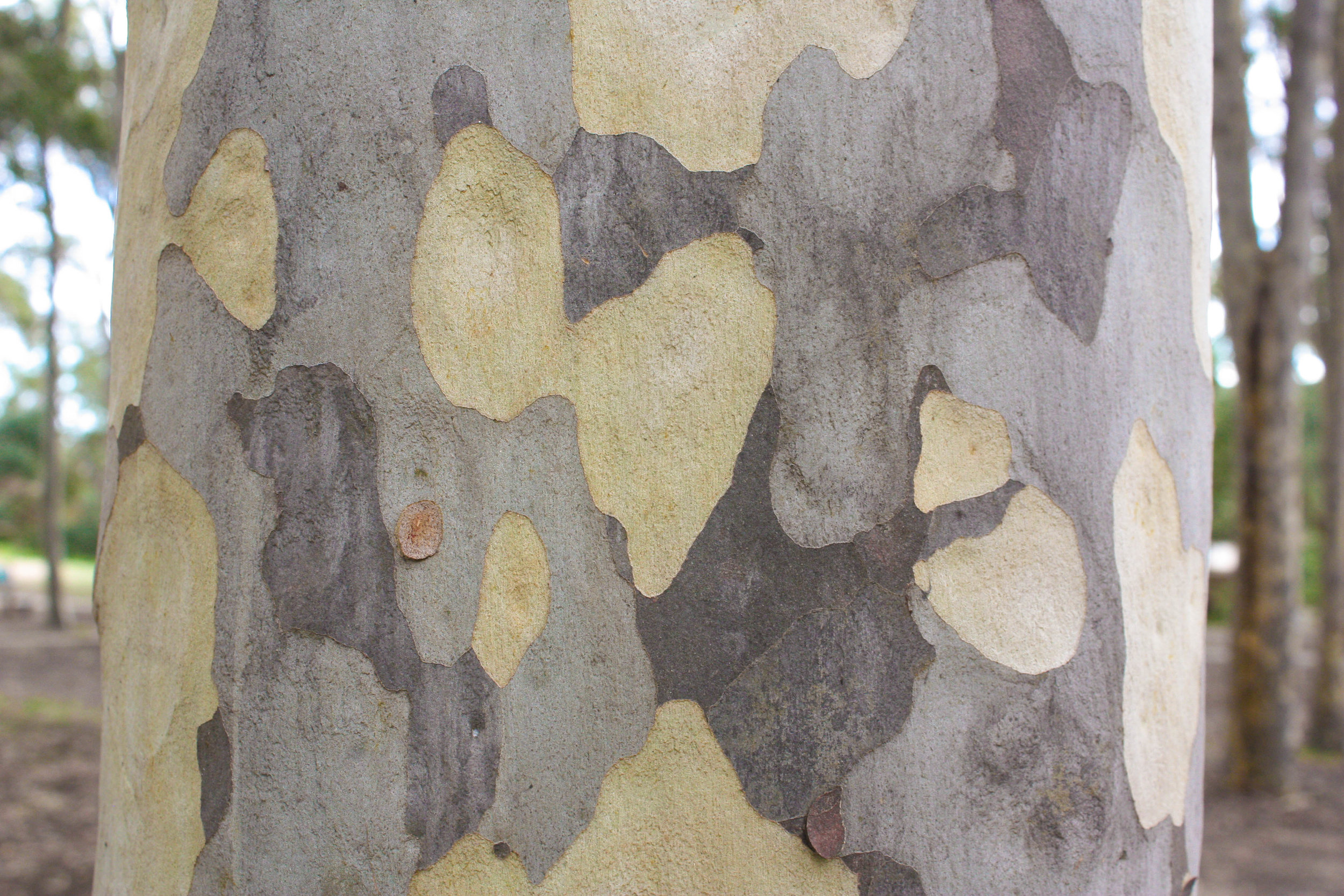 Reading about a tree is not the same as feeling its bark with our own hands.  Image: Alex Mullarky
