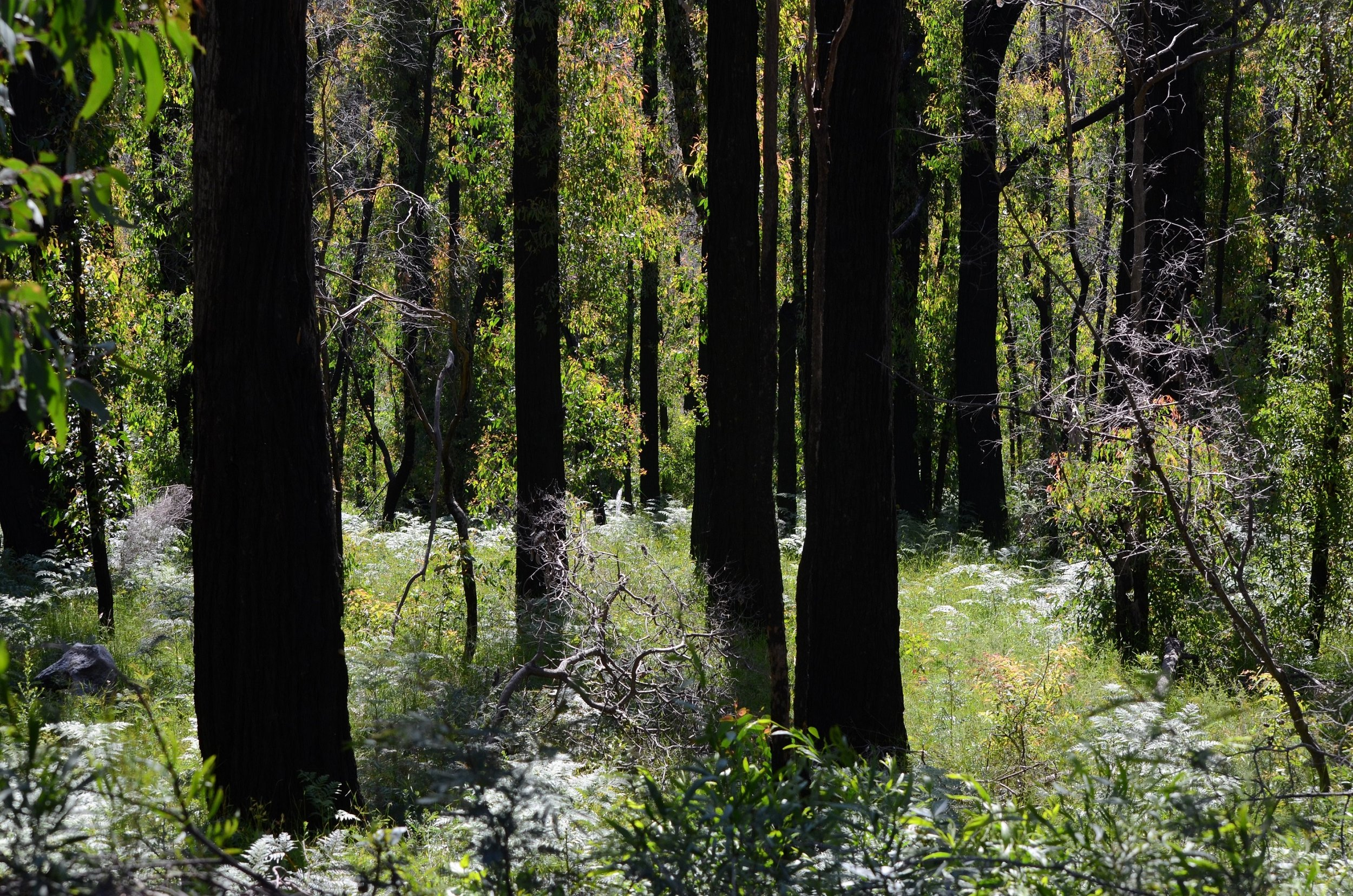 More frequent burnings can kill off some plant species.  Image: Sarah Bond