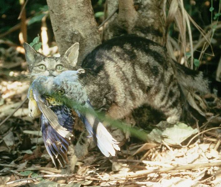 A variety of bird and mammal species are at risk of extinction, due in part to the threat of feral cats. Image: Wikimedia Commons / Brisbane City Council