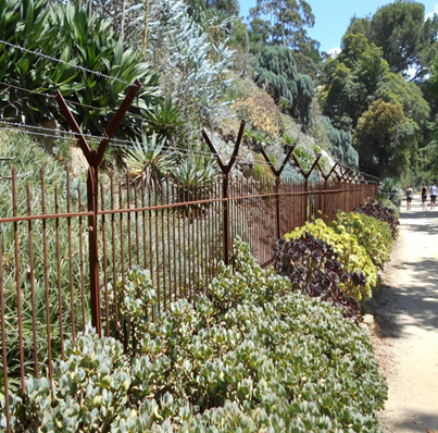 Overflowing succulents on the path to the Music Bowl.  Image: Bruna Costa