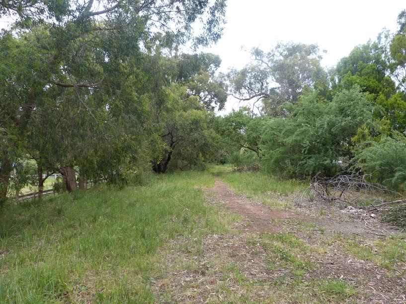 A section of the reserve prior to wood weed removal.  Image: Robert Pergl
