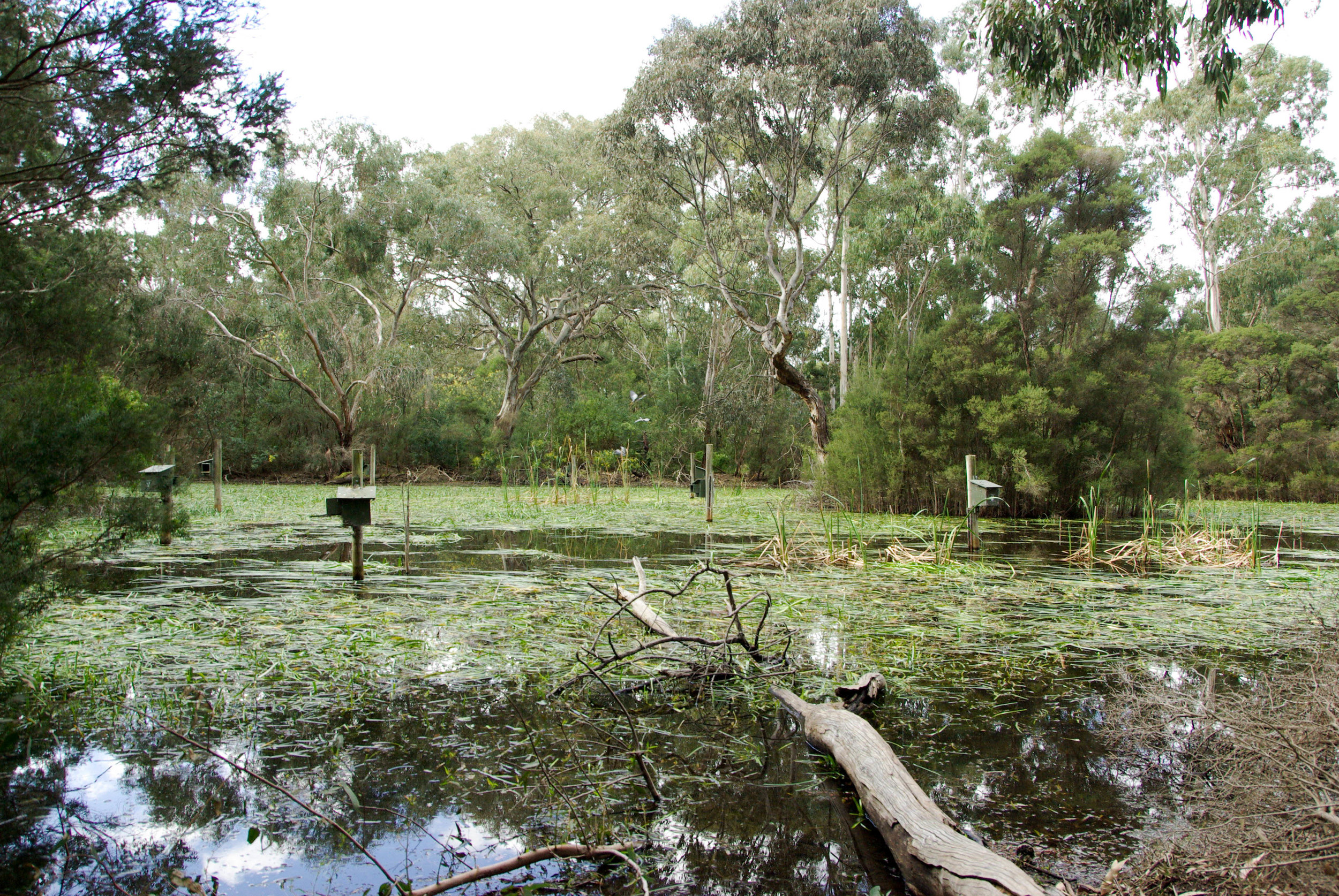 The Sanctuary's network of wetlands filter water and provide a unique habitat for indigenous flora and fauna.  Image:   Jacinta Humphrey