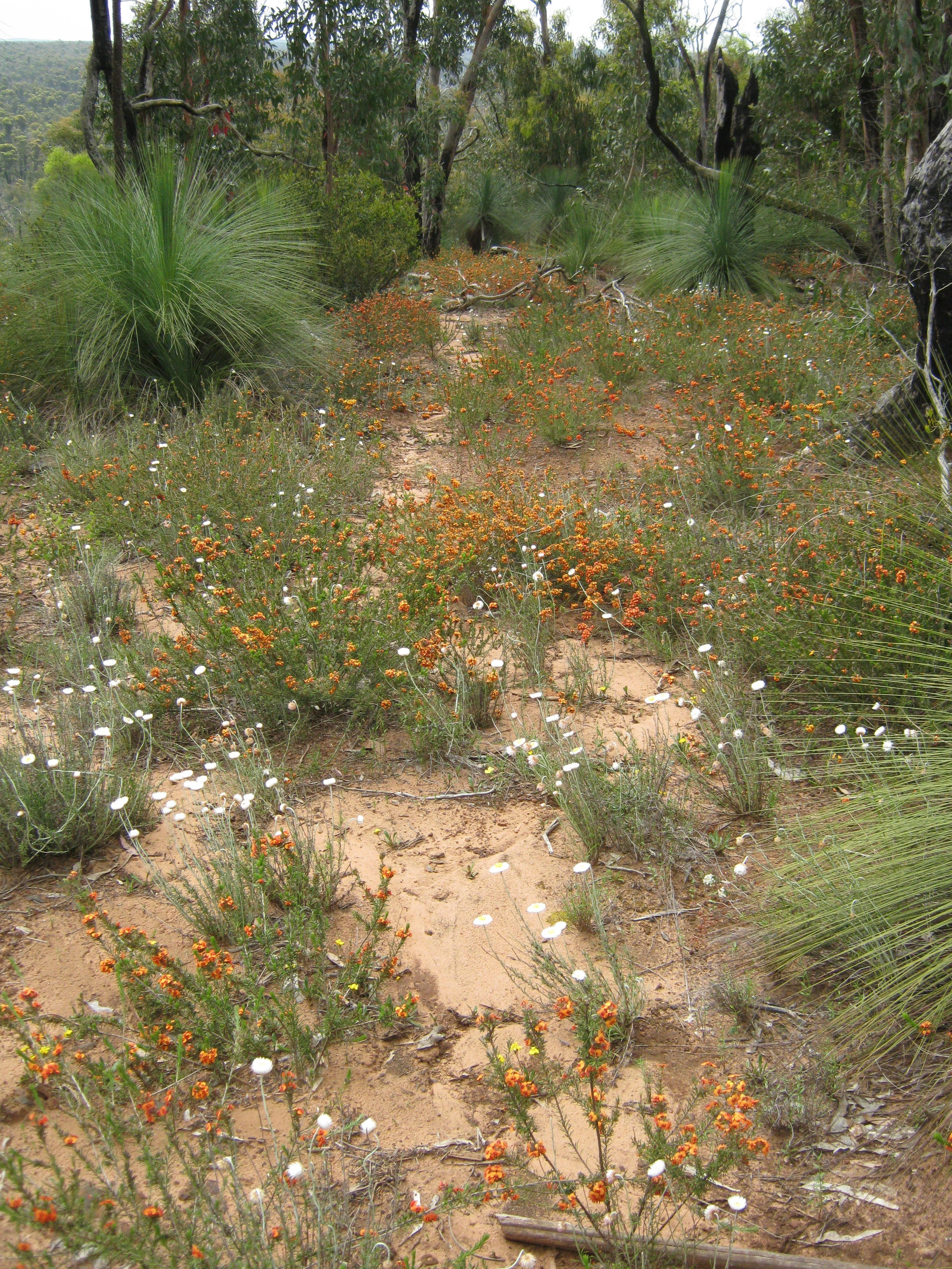 A view of grass trees and wildflowers. Image: Wendy Cook