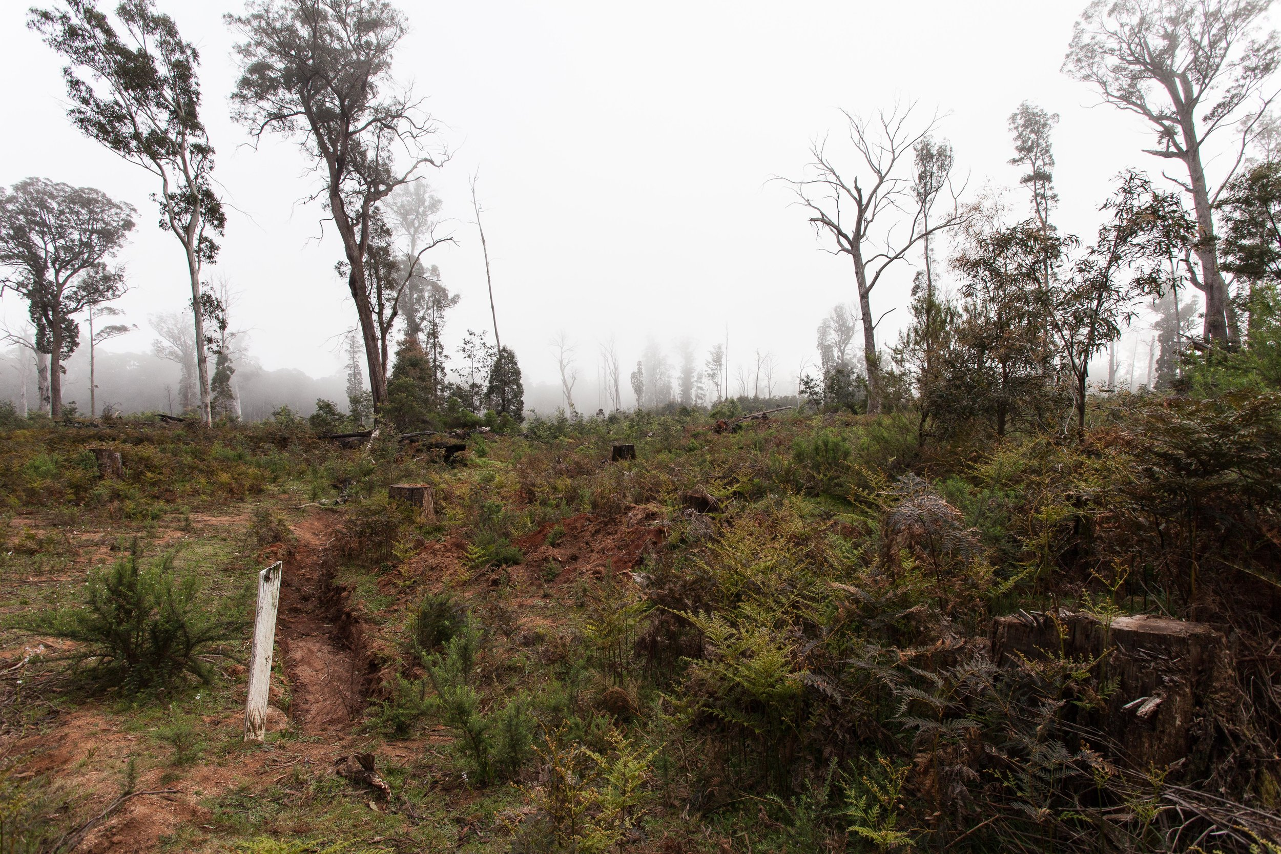 Logging is one of the major threats to Strathbogie State Forest and the fauna that inhabit it.  Image: Michael Flett