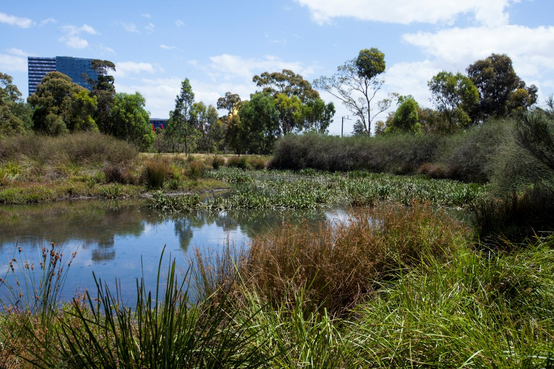Trin Warren Tam-boore Wetland in Royal Park.  Image:    City of Melbourne