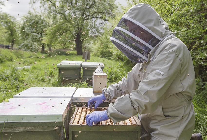 Bee-Inspector-016