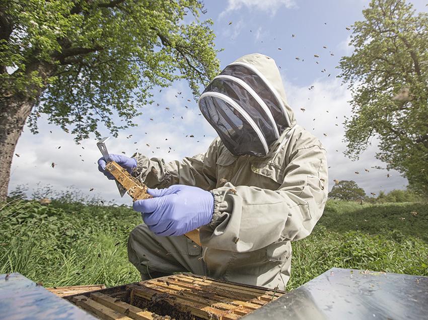 Bee Inspector