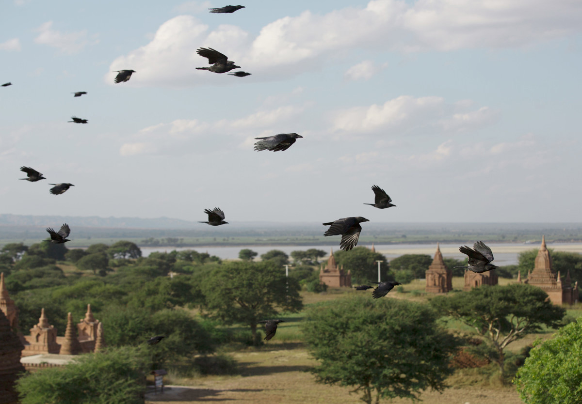 Birds over Bagan