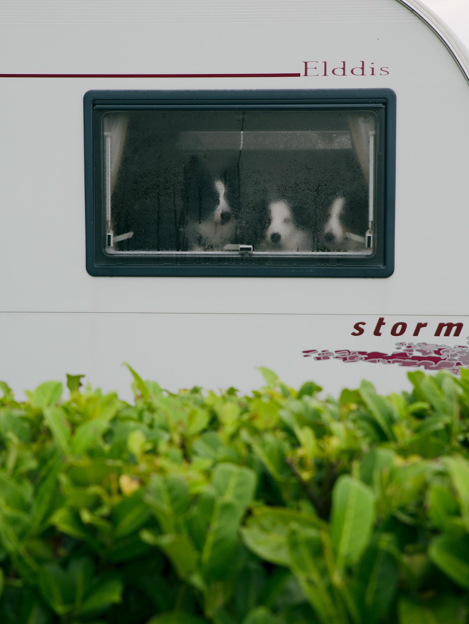 Dogs-Caravan-1.jpg
