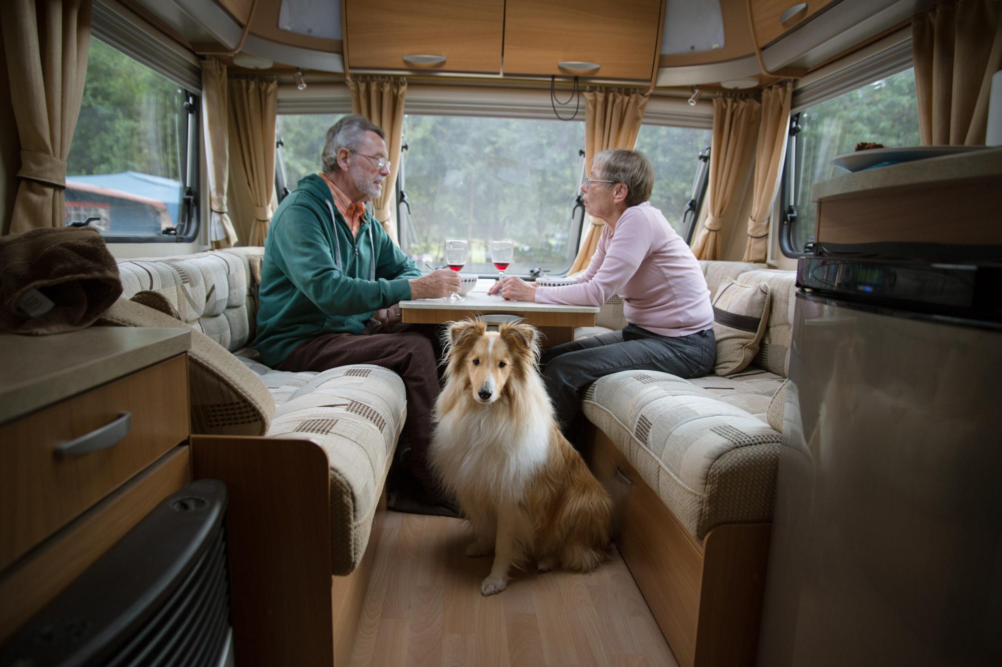 Dogs-Caravan-6.jpg