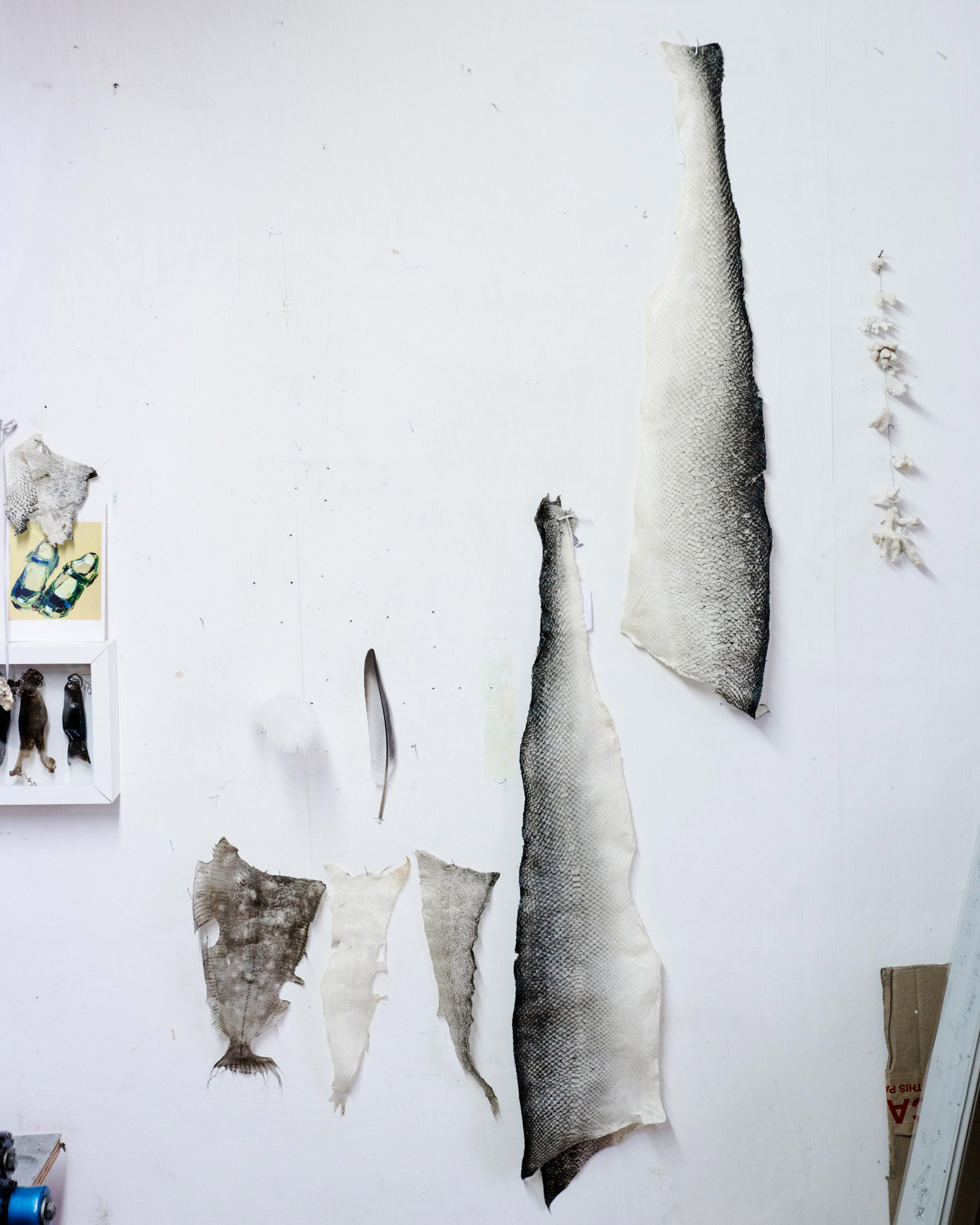 Fish skins hung in Kari's studio.