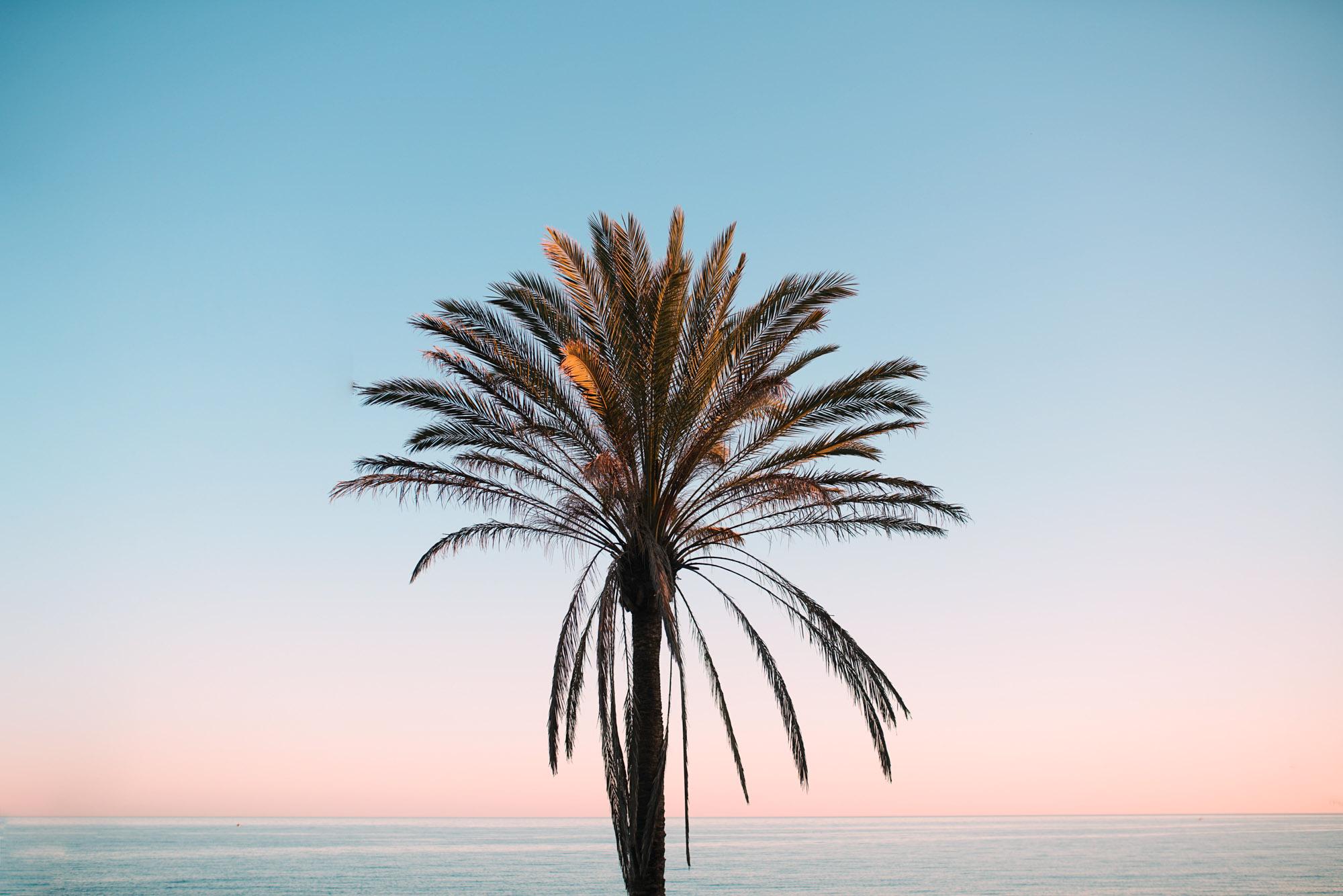 Palm Tree Photograph