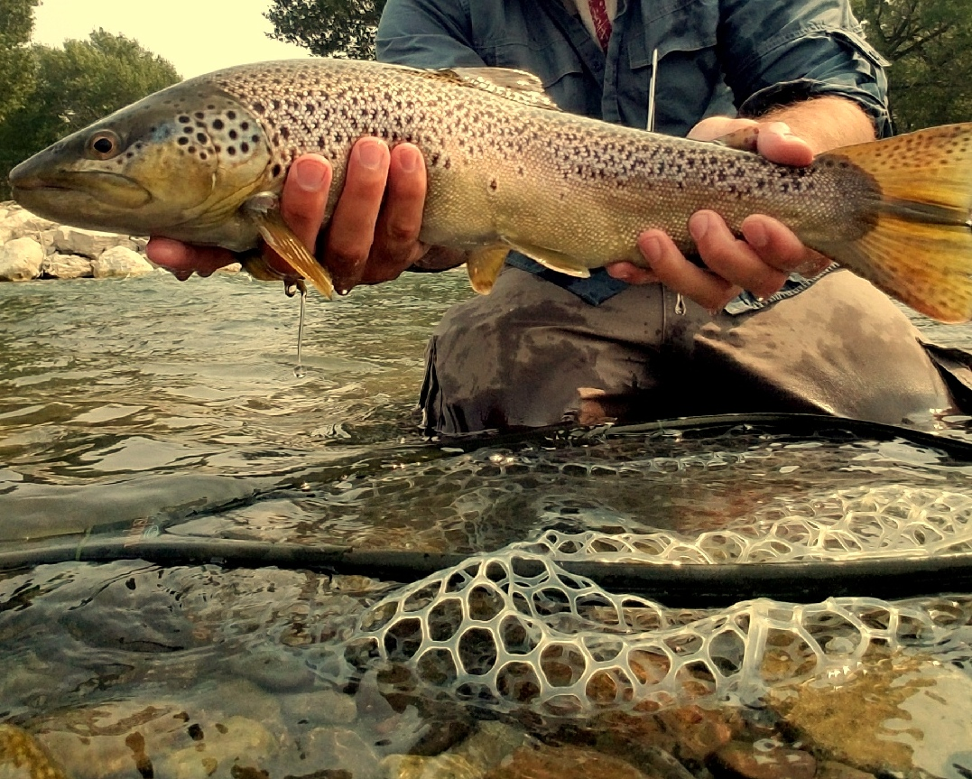regs - To help ensure a healthy fishery, guided fly fishing trips are catch-and-release only. All anglers must possess a valid Wyoming fishing license.