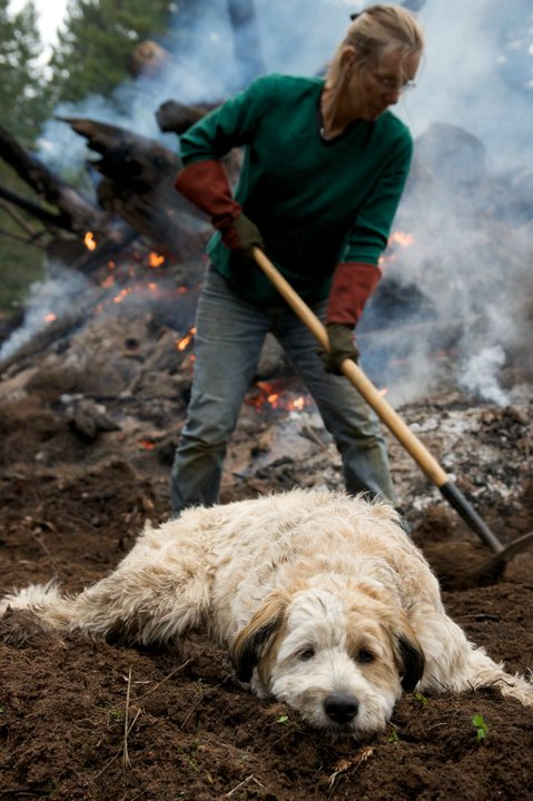 Sydney working on a burning underbrush with resident dog Garby