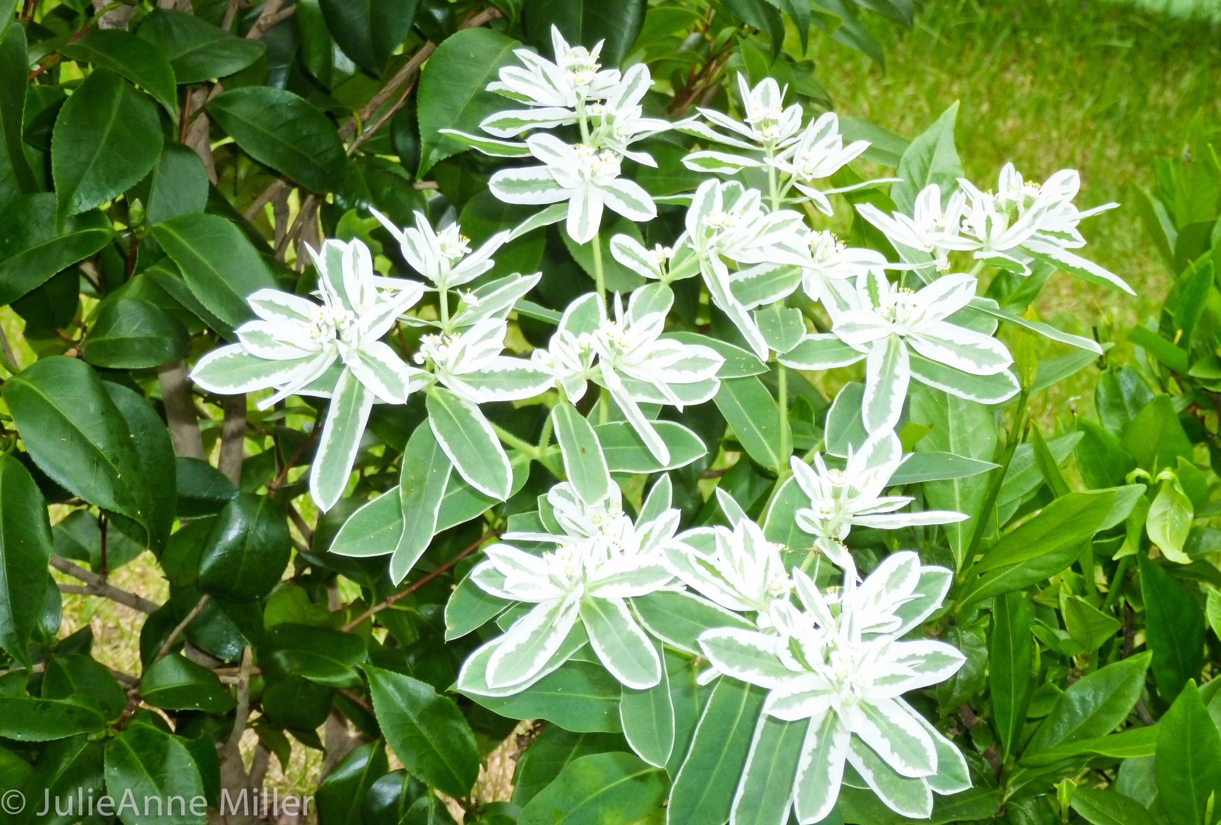 white flowers closeup.jpg
